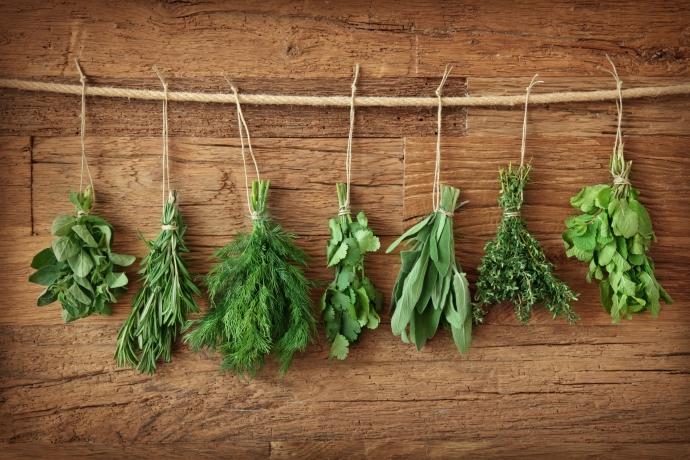 Gyógynövények gyűjtése